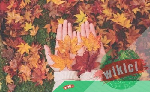 Những bài thơ về mùa thu buồn, lãng mạn hay nhất-7