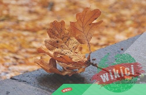 Những bài thơ về mùa thu buồn, lãng mạn hay nhất-8