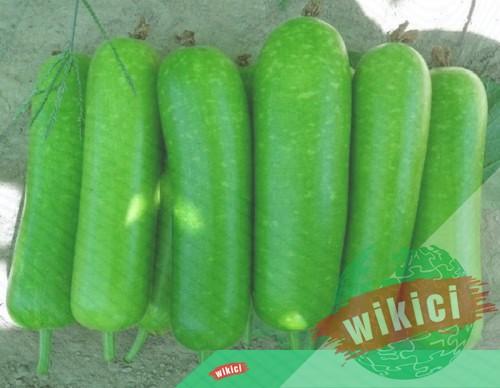 Cách trồng bầu cho nhiều quả ăn không hết-5