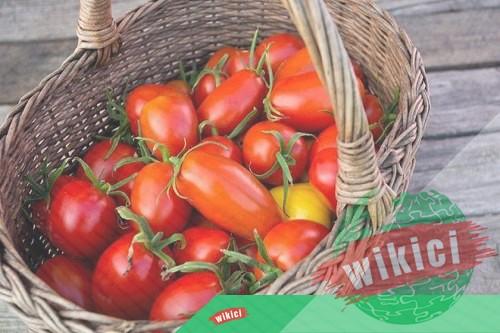 Cách trồng cà chua nhanh lớn, sai trĩu quả trong thùng xốp, chậu-5