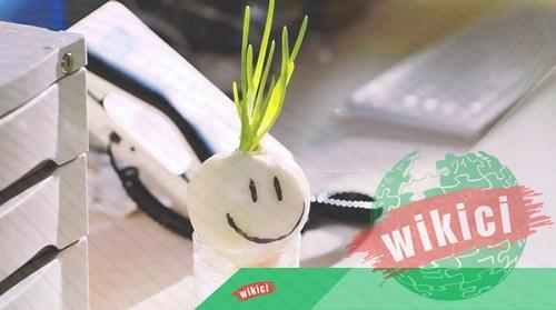 Cách trồng củ hành