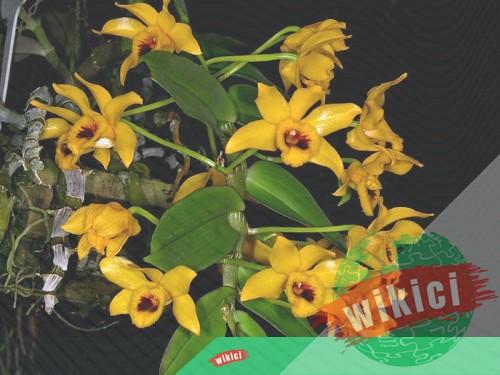 Cách trồng lan trầm vàng đẹp đơn giản tại nhà-6
