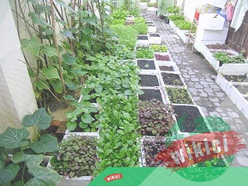 Cách trồng rau thơm tại nhà đơn giản-1