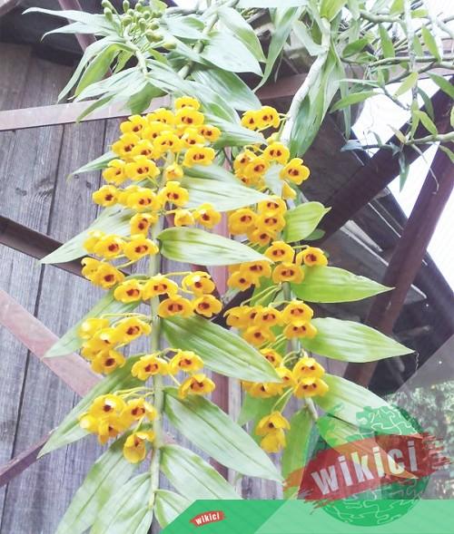 Cách trồng và chăm sóc lan rừng nở hoa như ý muốn-1