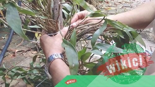 Cách trồng và chăm sóc lan rừng nở hoa như ý muốn-3