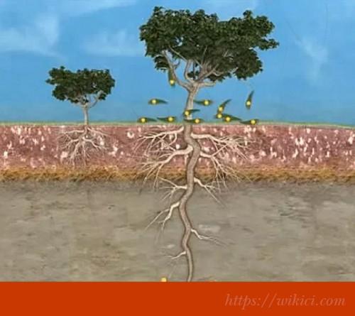 Có bao nhiêu loại rễ cây?-1