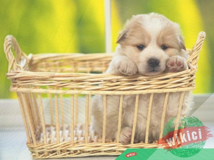 Hình nền con chó đẹp đáng yêu dễ thương nhất-1