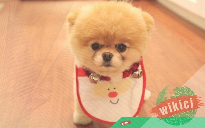Hình nền con chó đẹp đáng yêu dễ thương nhất-11