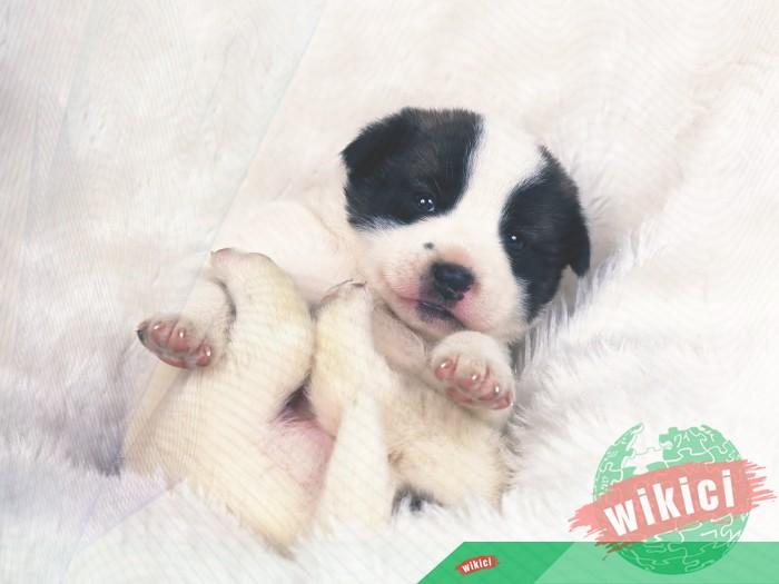 Hình nền con chó đẹp đáng yêu dễ thương nhất-16