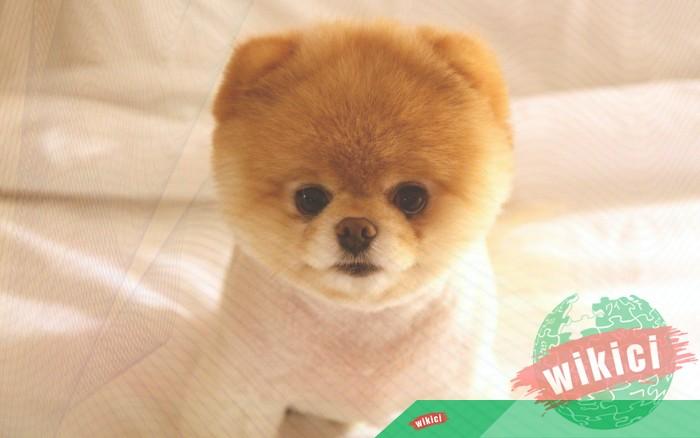 Hình nền con chó đẹp đáng yêu dễ thương nhất-17