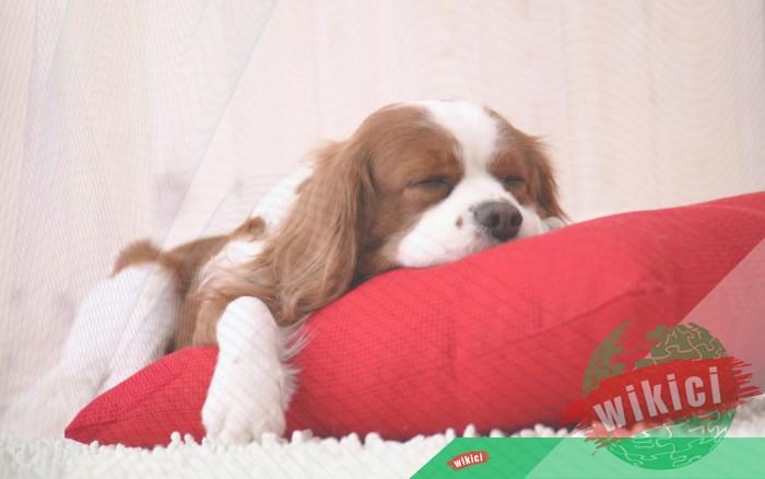 Hình nền con chó đẹp đáng yêu dễ thương nhất-18