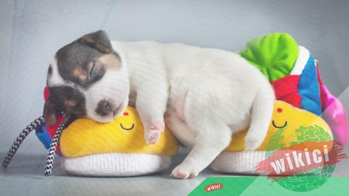 Hình nền con chó đẹp đáng yêu dễ thương nhất-19