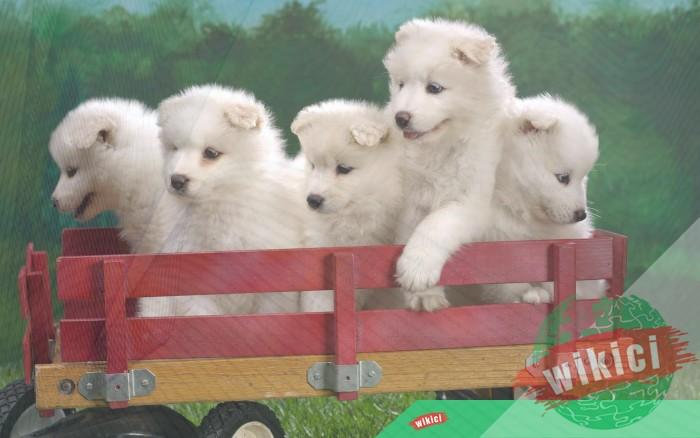 Hình nền con chó đẹp đáng yêu dễ thương nhất-20