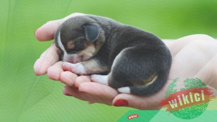 Hình nền con chó đẹp đáng yêu dễ thương nhất-22