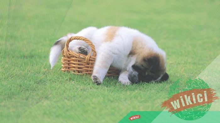 Hình nền con chó đẹp đáng yêu dễ thương nhất-24
