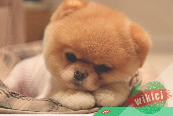 Hình nền con chó đẹp đáng yêu dễ thương nhất-25