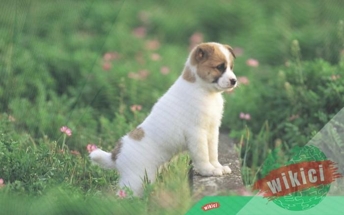 Hình nền con chó đẹp đáng yêu dễ thương nhất-26