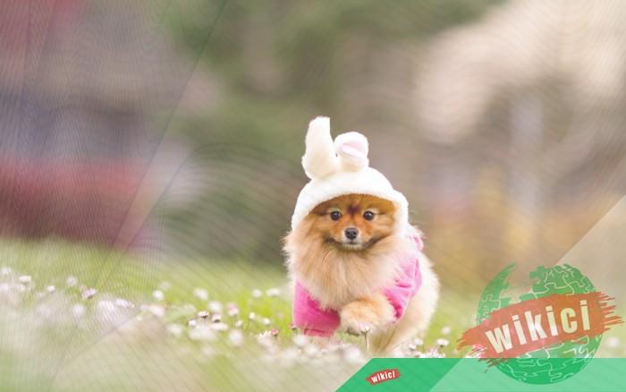 Hình nền con chó đẹp đáng yêu dễ thương nhất-29