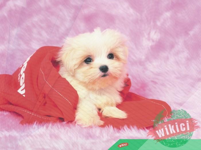 Hình nền con chó đẹp đáng yêu dễ thương nhất-30