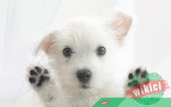 Hình nền con chó đẹp đáng yêu dễ thương nhất-32