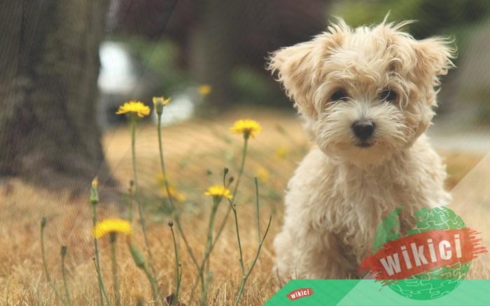Hình nền con chó đẹp đáng yêu dễ thương nhất-34