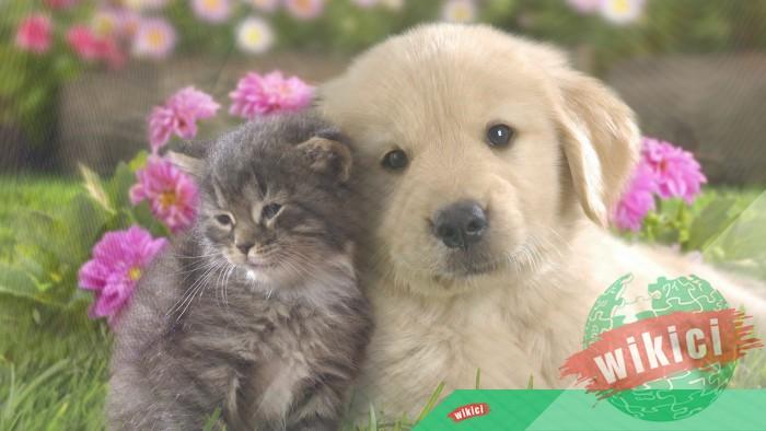 Hình nền con chó đẹp đáng yêu dễ thương nhất-37