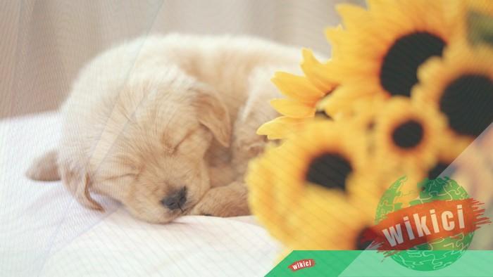 Hình nền con chó đẹp đáng yêu dễ thương nhất-40