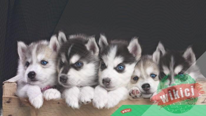 Hình nền con chó đẹp đáng yêu dễ thương nhất-41