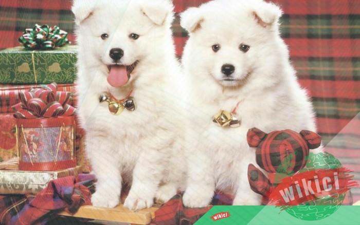 Hình nền con chó đẹp đáng yêu dễ thương nhất-6