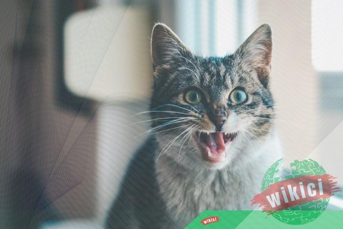 Hình nền mèo đẹp cute dễ thương cho máy tính, điện thoại-14