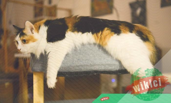 Hình nền mèo đẹp cute dễ thương cho máy tính, điện thoại-25