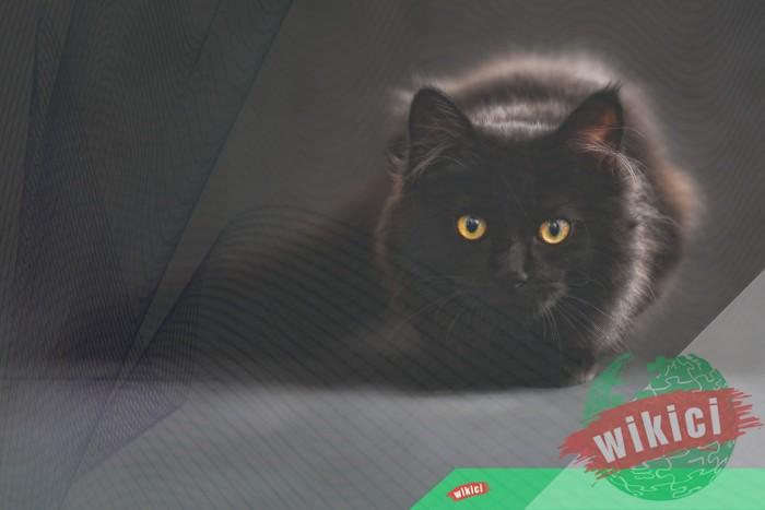 Hình nền mèo đẹp cute dễ thương cho máy tính, điện thoại-26