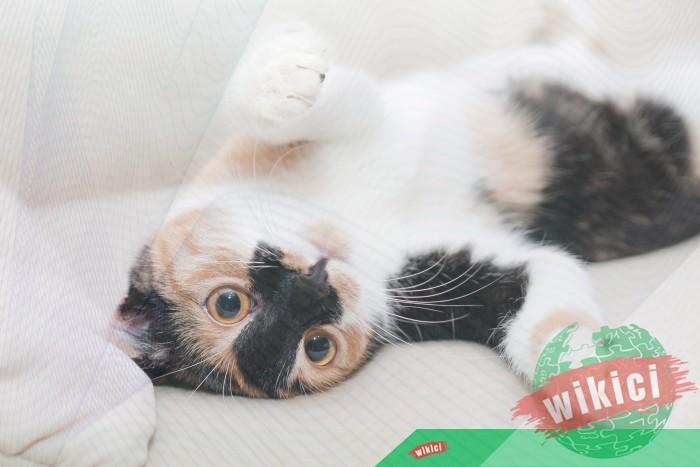 Hình nền mèo đẹp cute dễ thương cho máy tính, điện thoại-31