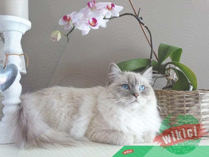 Hình nền mèo đẹp cute dễ thương cho máy tính, điện thoại-34