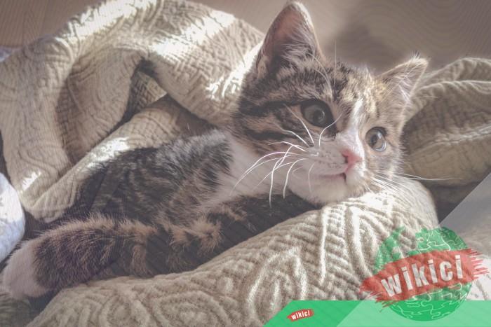 Hình nền mèo đẹp cute dễ thương cho máy tính, điện thoại-36