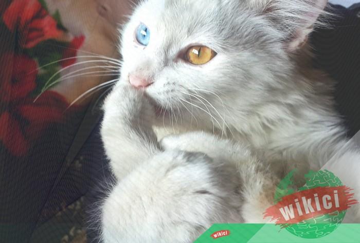 Hình nền mèo đẹp cute dễ thương cho máy tính, điện thoại-37