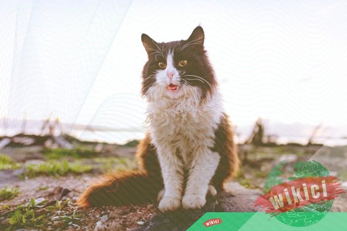 Hình nền mèo đẹp cute dễ thương cho máy tính, điện thoại-39