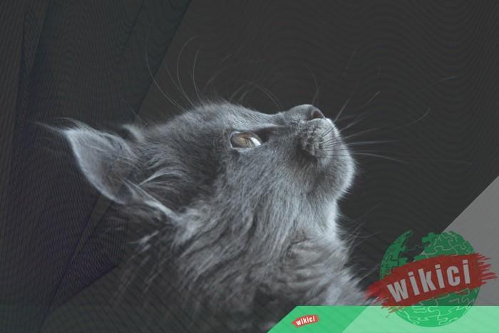 Hình nền mèo đẹp cute dễ thương cho máy tính, điện thoại-8