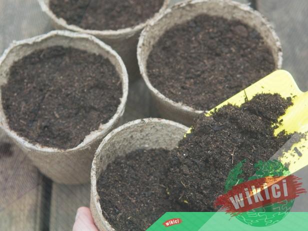 Kinh nghiệm trồng và chăm sóc cây lưỡi hổ-4
