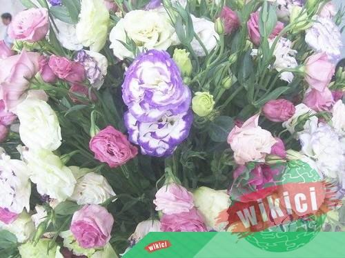 Mừng khai trương nên tặng hoa gì?-7