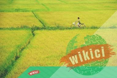 Thuyết minh về cây lúa – Loại cây lương thực chủ yếu ở nước ta-1