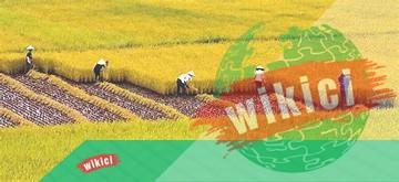 Thuyết minh về cây lúa – Loại cây lương thực chủ yếu ở nước ta-4