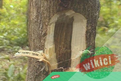 Trầm hương là gì? Tác dụng, cách nhận biết gỗ trầm hương-2