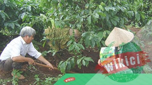 Vai trò của canxi đối với cây trồng-3